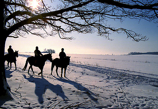 Winter at Krumkill Stables; where else can you take our horses into the White New York snow.