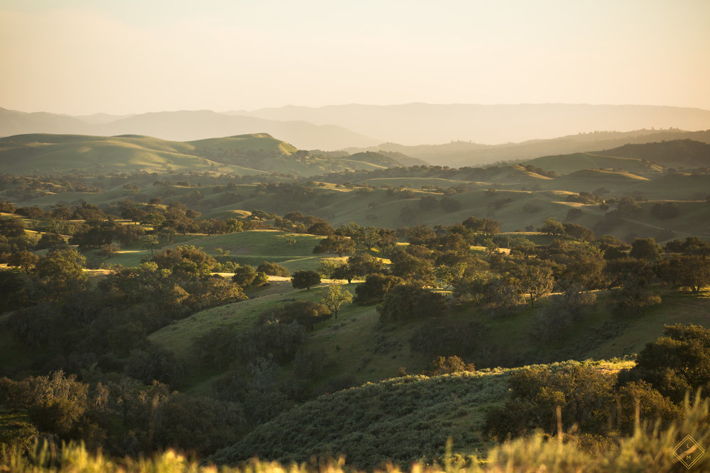 ChamberlinRanch_SunsetLandscape_Lauren Maeve_29.jpg
