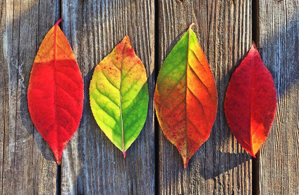 seasons leaves1917x1248.jpg