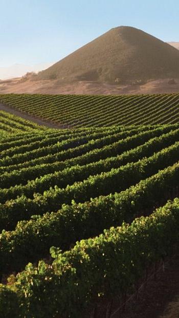 SLO Wine -
