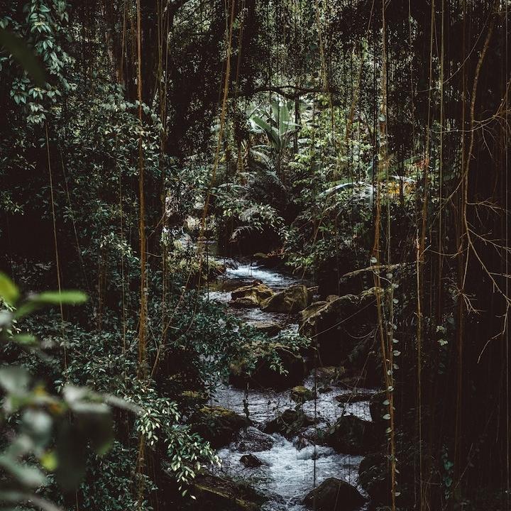 ECUADORAmazon Awakenings - June 3-16, 2019