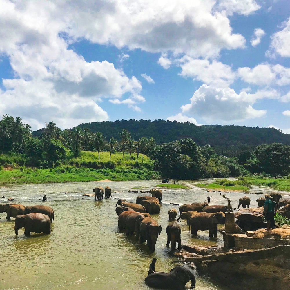 """July 6 - Relaxed cycle ride in sleepy but historic Girithale (Optional)Visit Minneriya National Park to see """"The Gathering,"""" the largest meeting of Asian elephants in the worldOvernight: Dambulla @ Jetwing Lake Dambulla"""