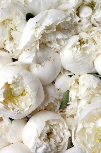 white peonies pinterest.jpg