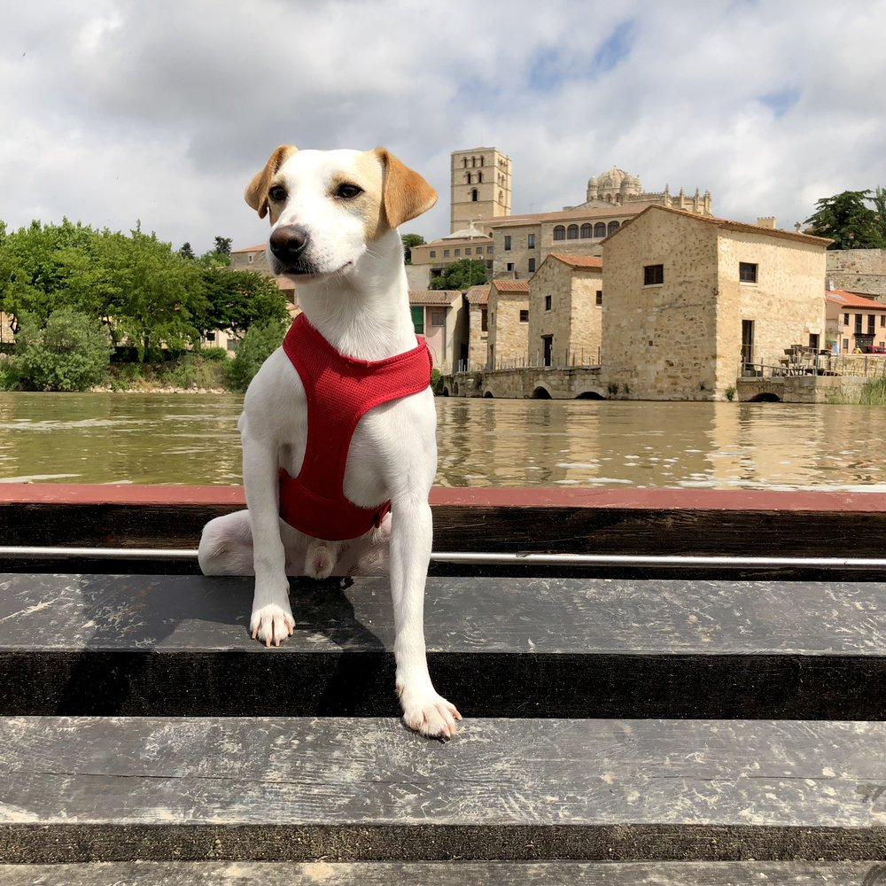 Dog-friendly barge on the Duero.