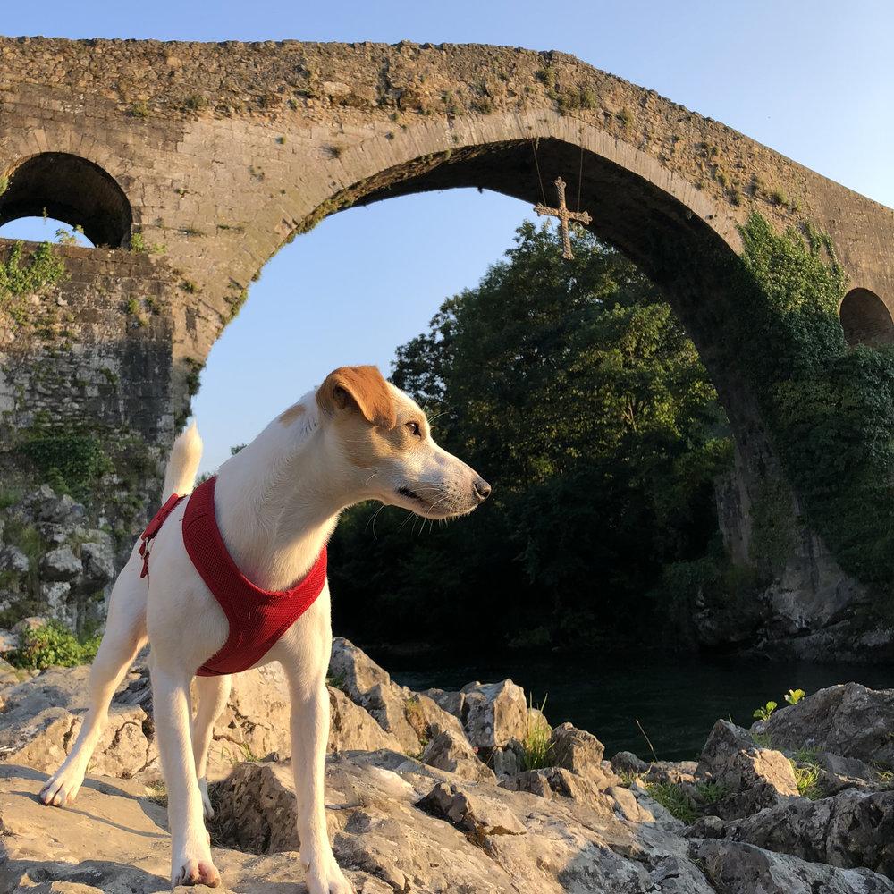 Pipper on the Roman Bridge of Cangas de Onís.