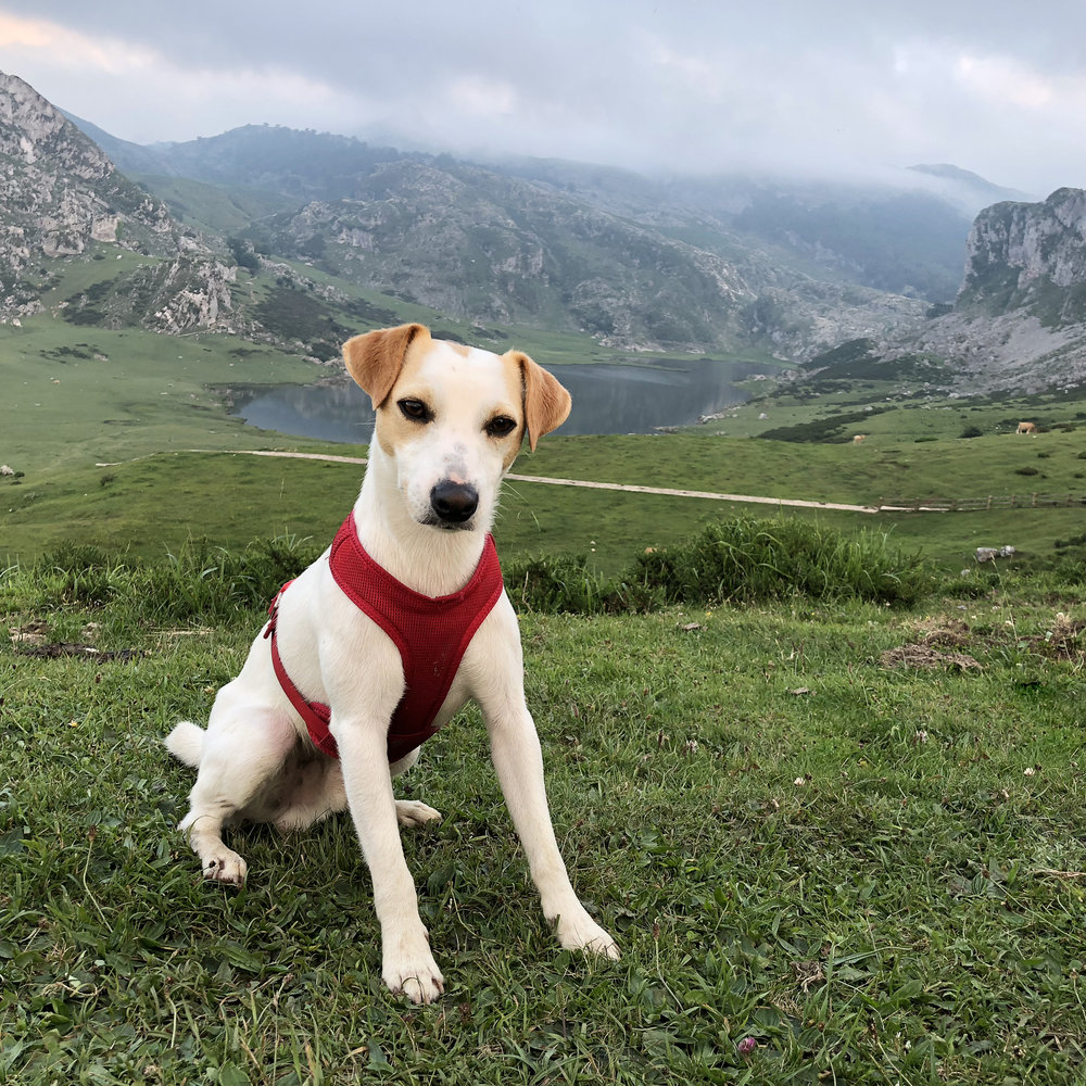 Pipper at Covadonga lakes.