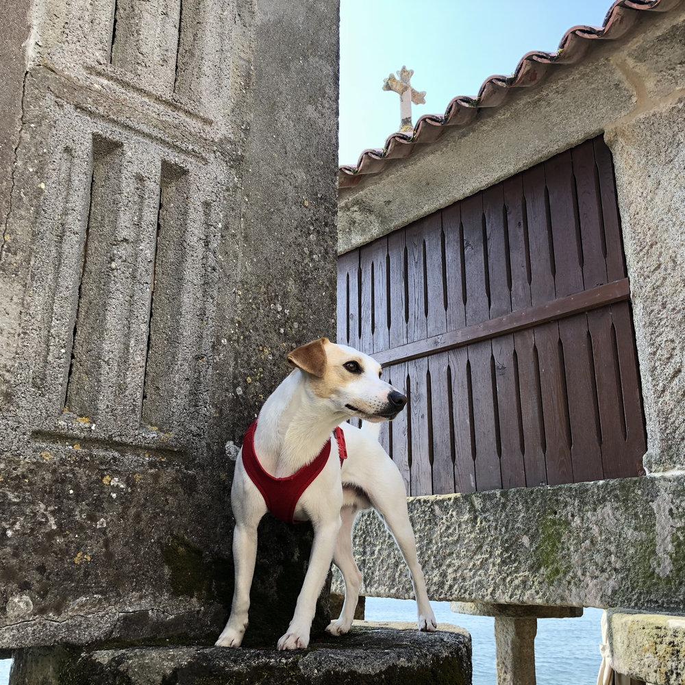 Pipper at the raised granaries of Combarro.