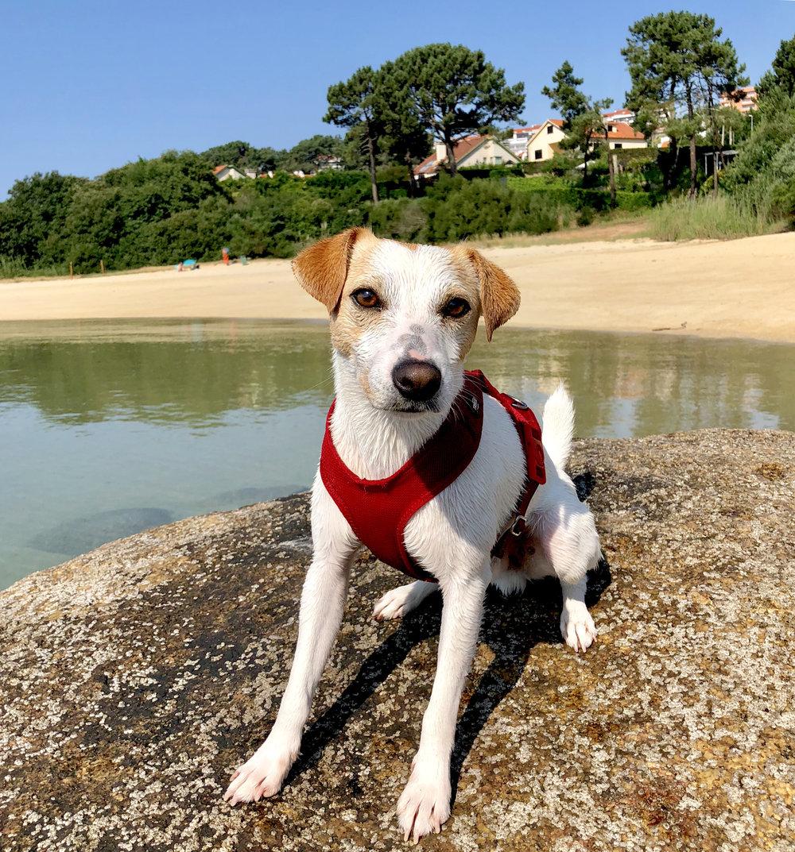 Pipper on O Espiño beach, beside the Pedras Negras marina, in O Grove.