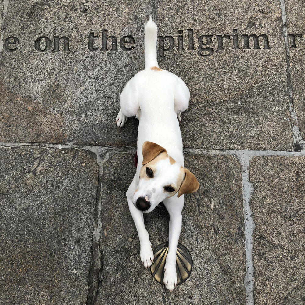 Pipper – just another pilgrim.