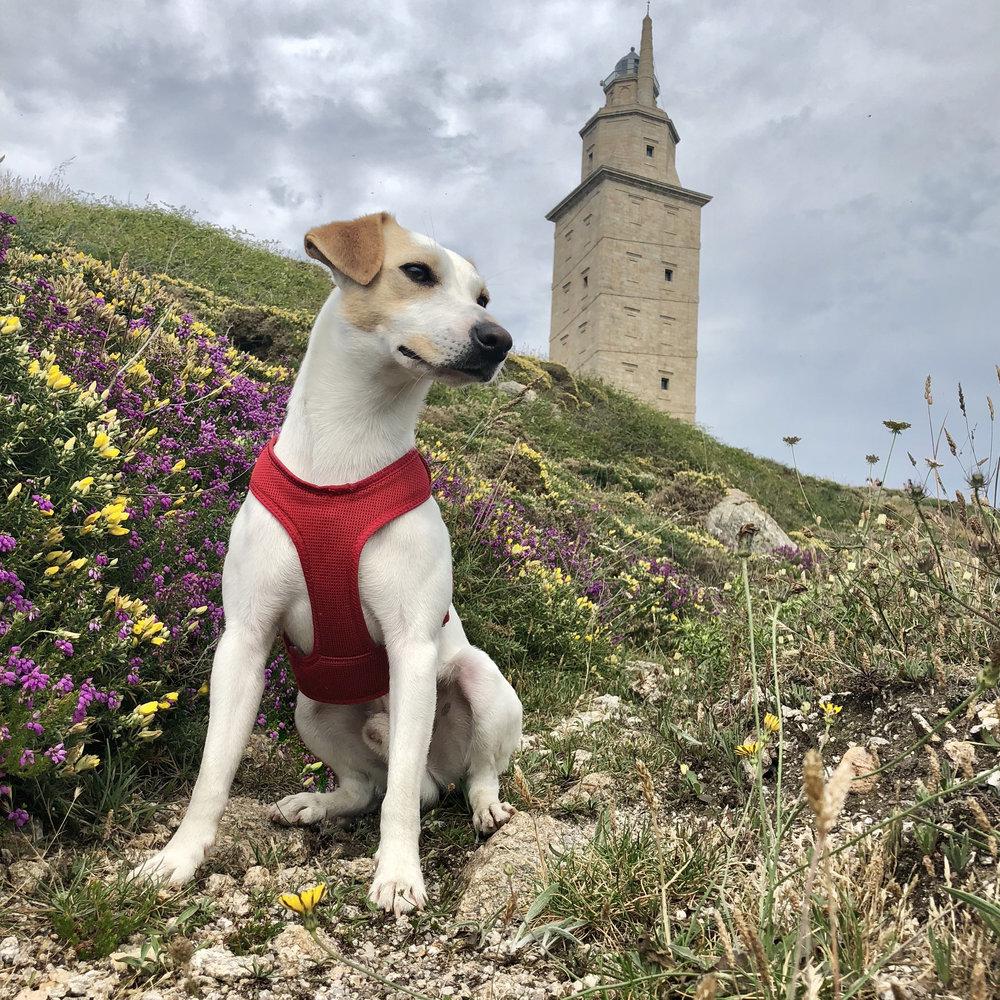 Looking for Hercules in A Coruña.