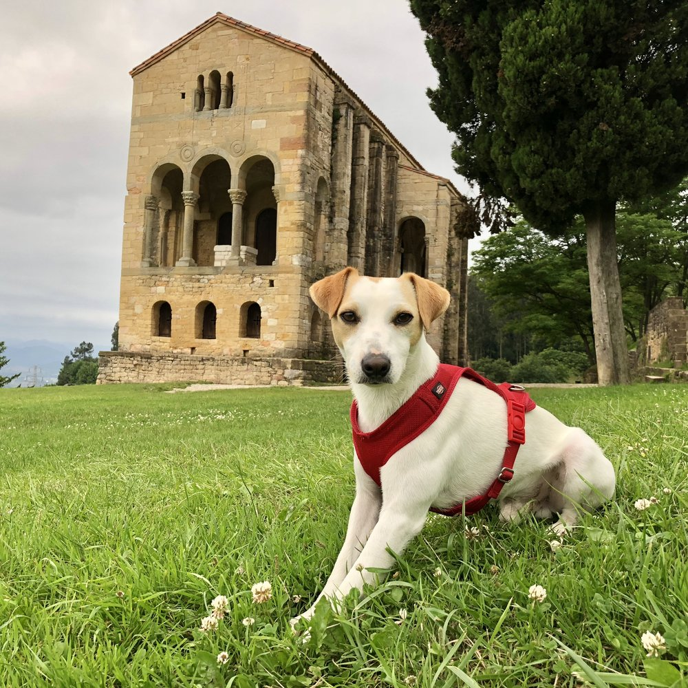 Pipper at Santa María del Naranco.