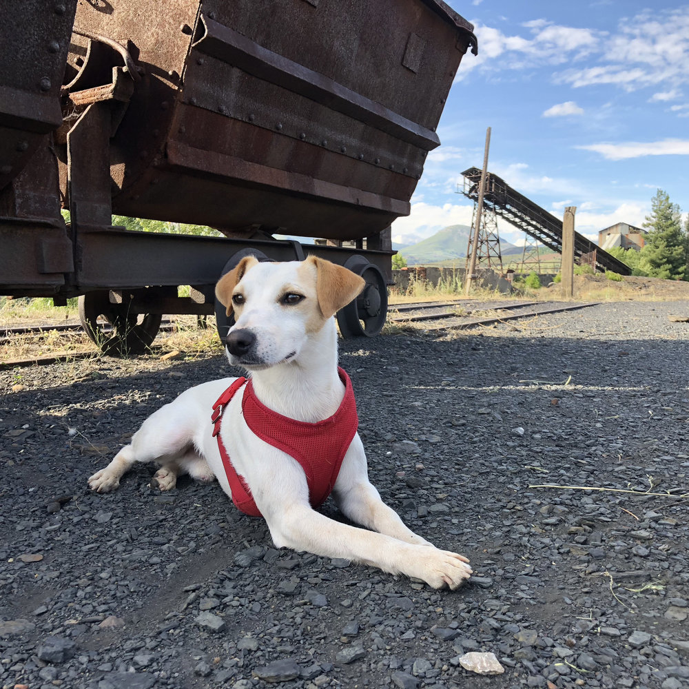Dog-friendly guided tours of the Pozo Julia mine (in Fabero).