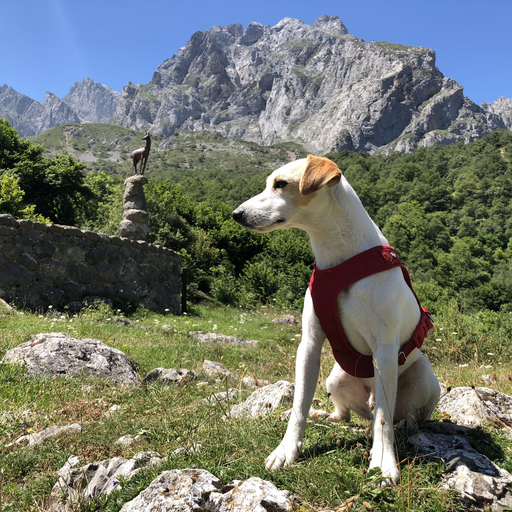 Tombo viewpoint, in the Picos de Europa.