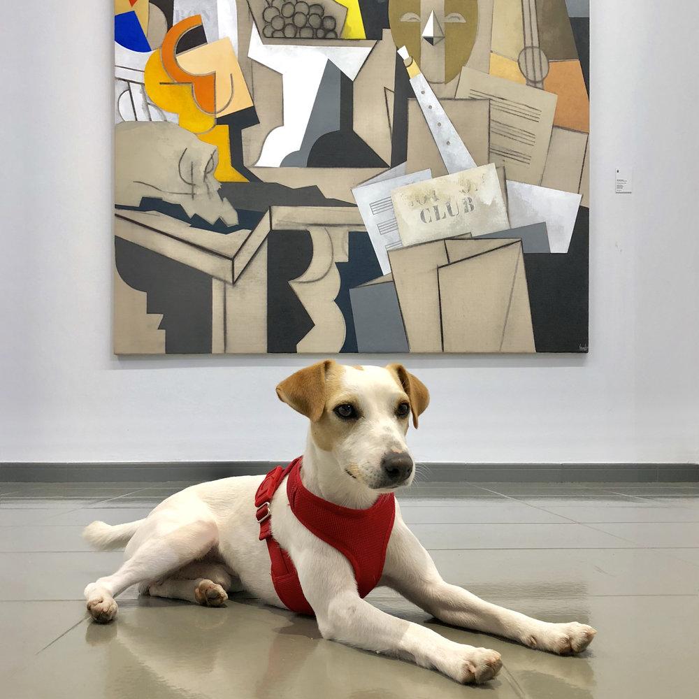 At the Fran Daurel Contemporary Art Foundation.