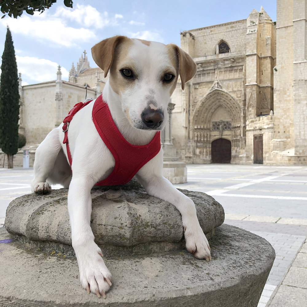 Exhausted outside Palencia Cathedral.