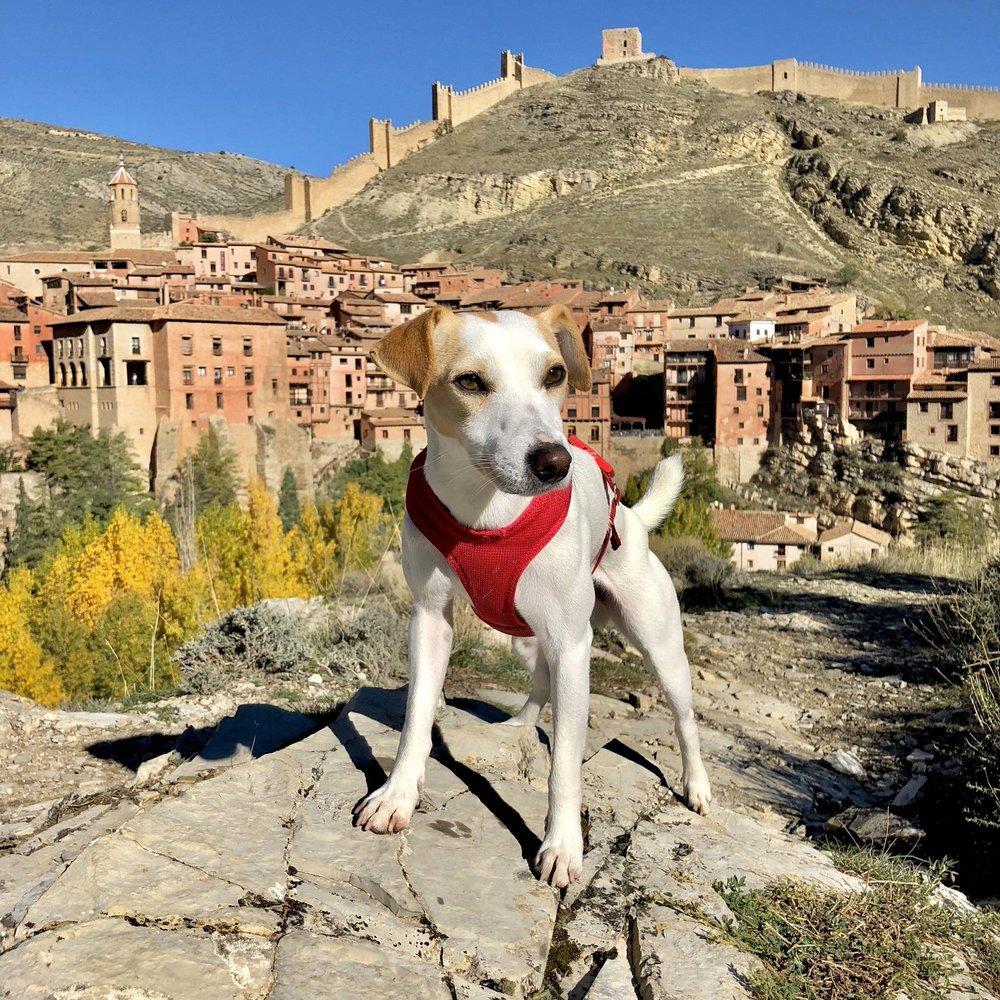 Pipper in Albarracín.