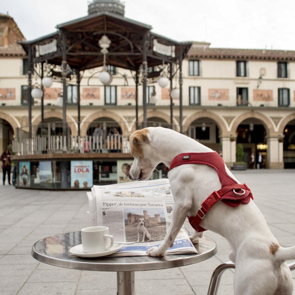 Reading the paper in Tudela's main square.