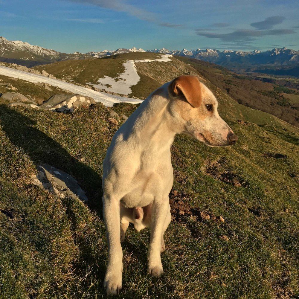 Admiring the Pyrenees.