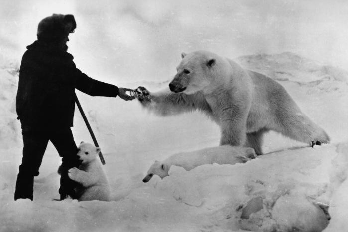 polar_bear_north_pole_1.jpg