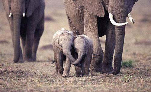 baby elephants together.jpg