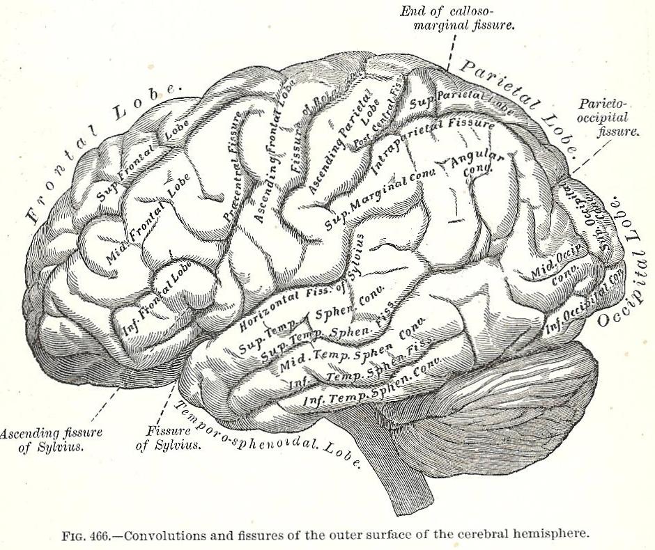 brain graphic 001.jpg