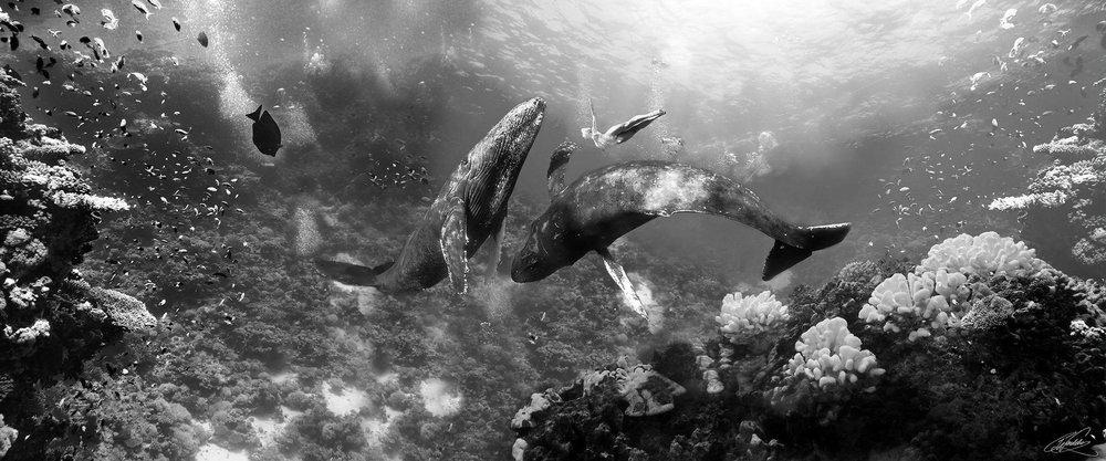 Stories from the ocean II