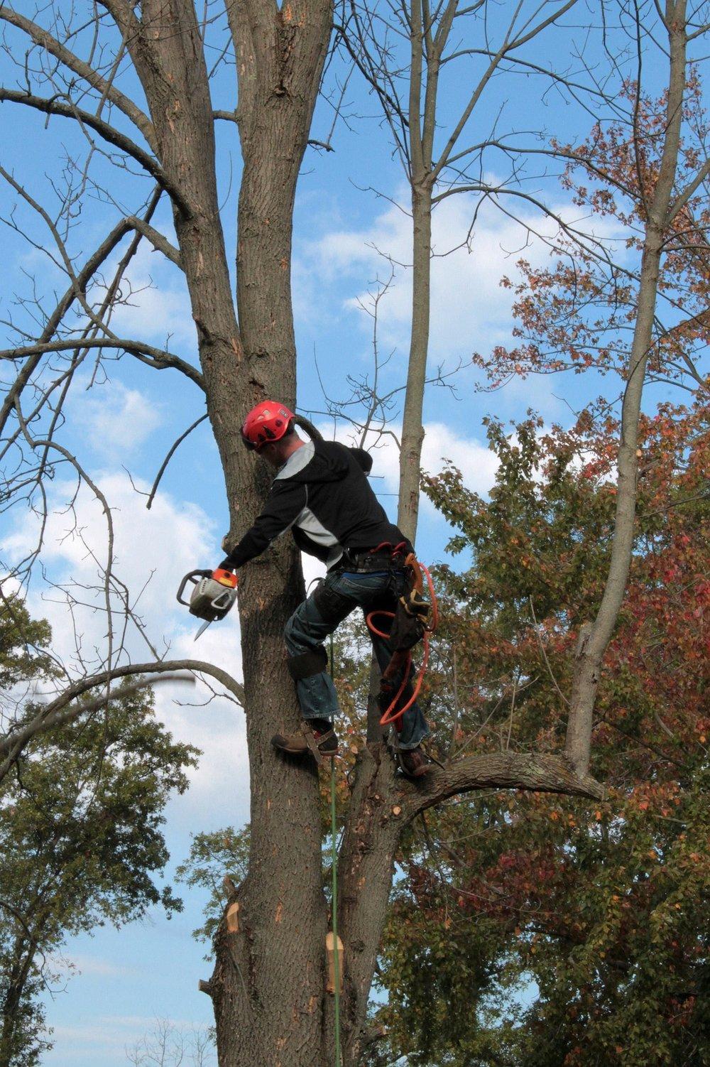 tree-1059416_1920.jpg