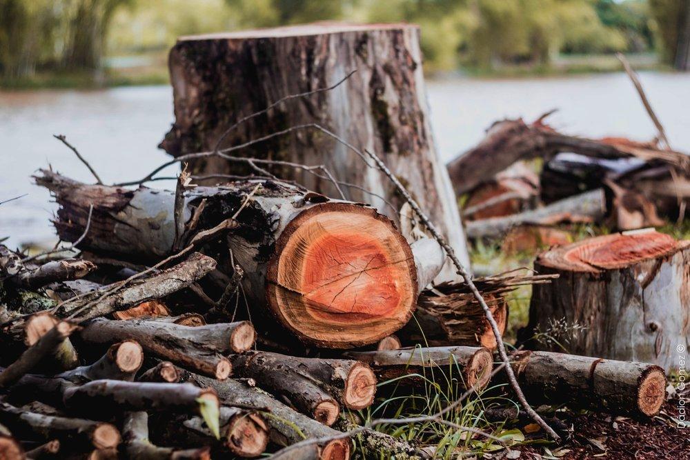 wood-cut-3411809_1920.jpg