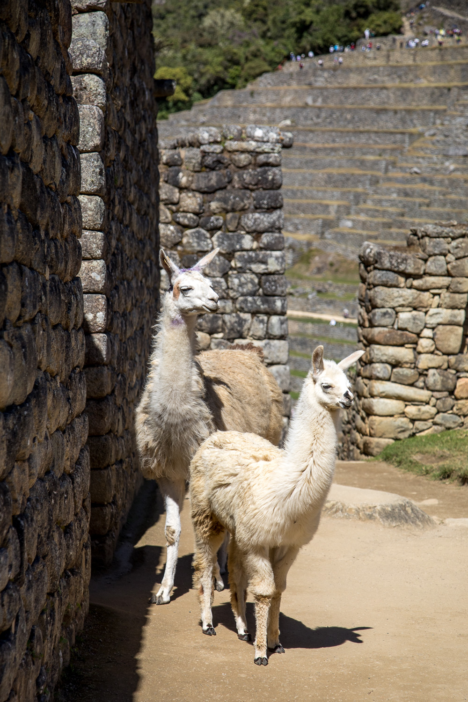 Peru2018_1125.jpg