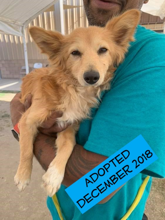 Fox Mulder - This sweet boy came to us from the City of Bakersfield Animal Care Center on November 8th. He is ridiculously sweet and friendly. At about 8 months old this Papillon/Pomeranian mix is already becoming a well mannered young man. Stay tuned for updates :)