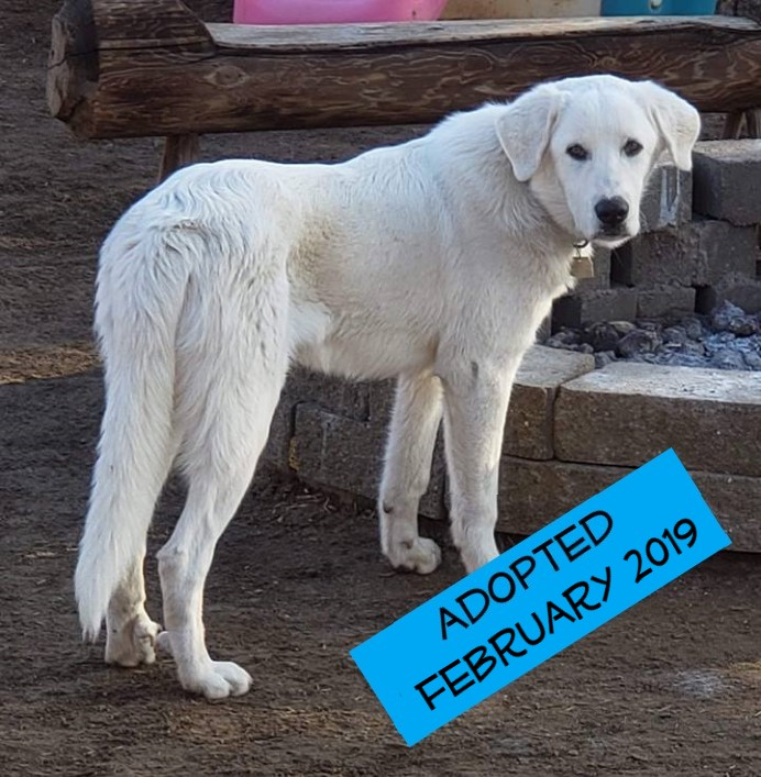 Sunny - Sunny came to us on December 1st from the City of Bakersfield  Animal Care