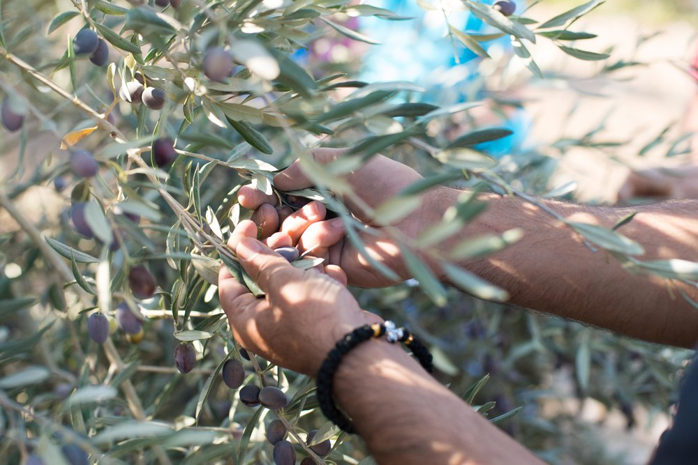 Zababdeh, Palestine/Israel