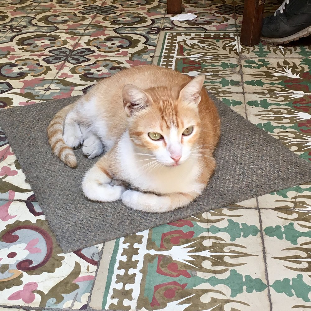 Cat lounging on a traditional tile floor at  El Café  in Old Havana.