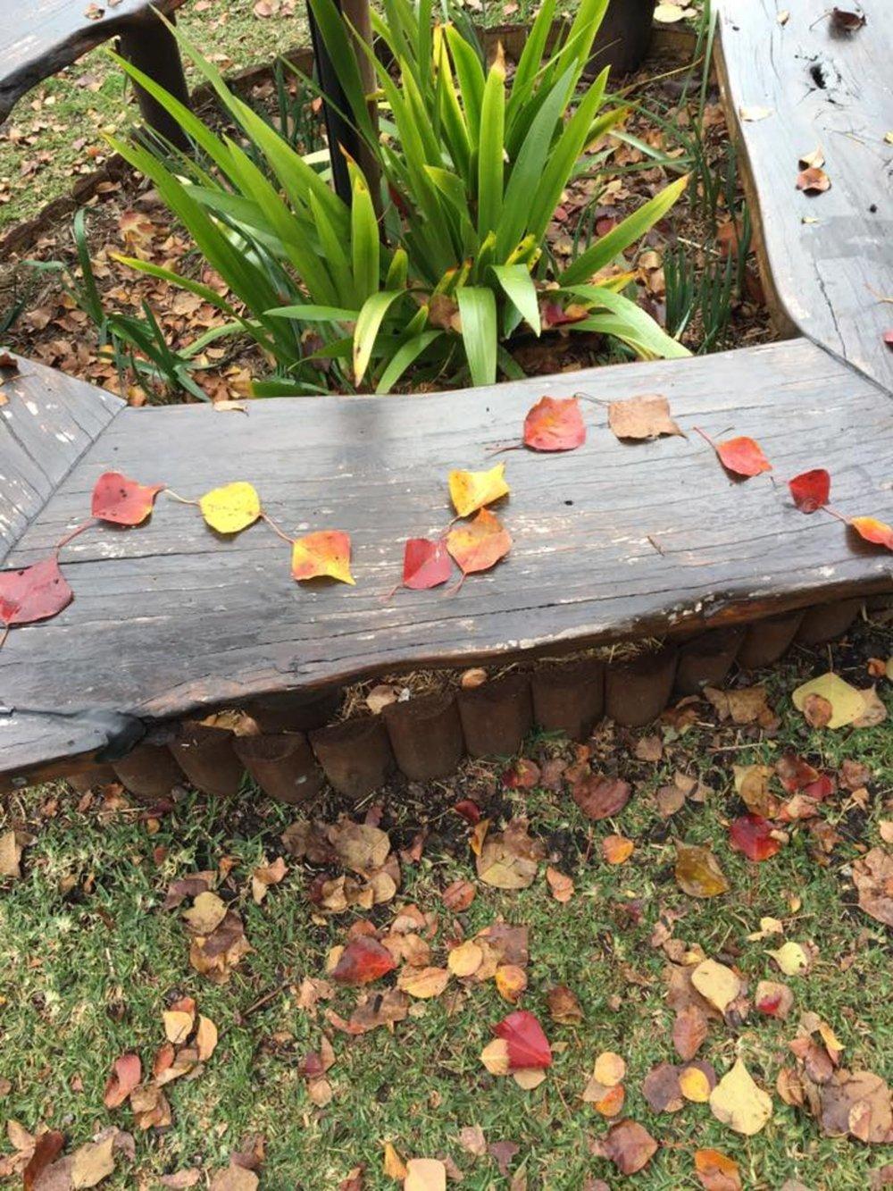 leaf patterns 3.jpg