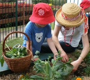 Picking-lettuce-small.jpg