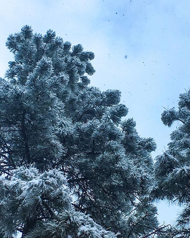 I am so looking forward to the beautiful spring all this snow will bring ✨🌱⠀ ⠀ ⠀ #flagstaffaz #flagstaff #flagstaffarizona #somuchsnow #springiscoming #springflowers #grateful