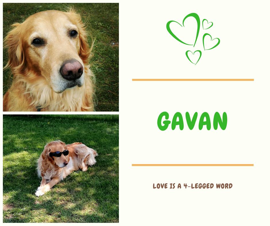Gavan Lecture - Copy.png