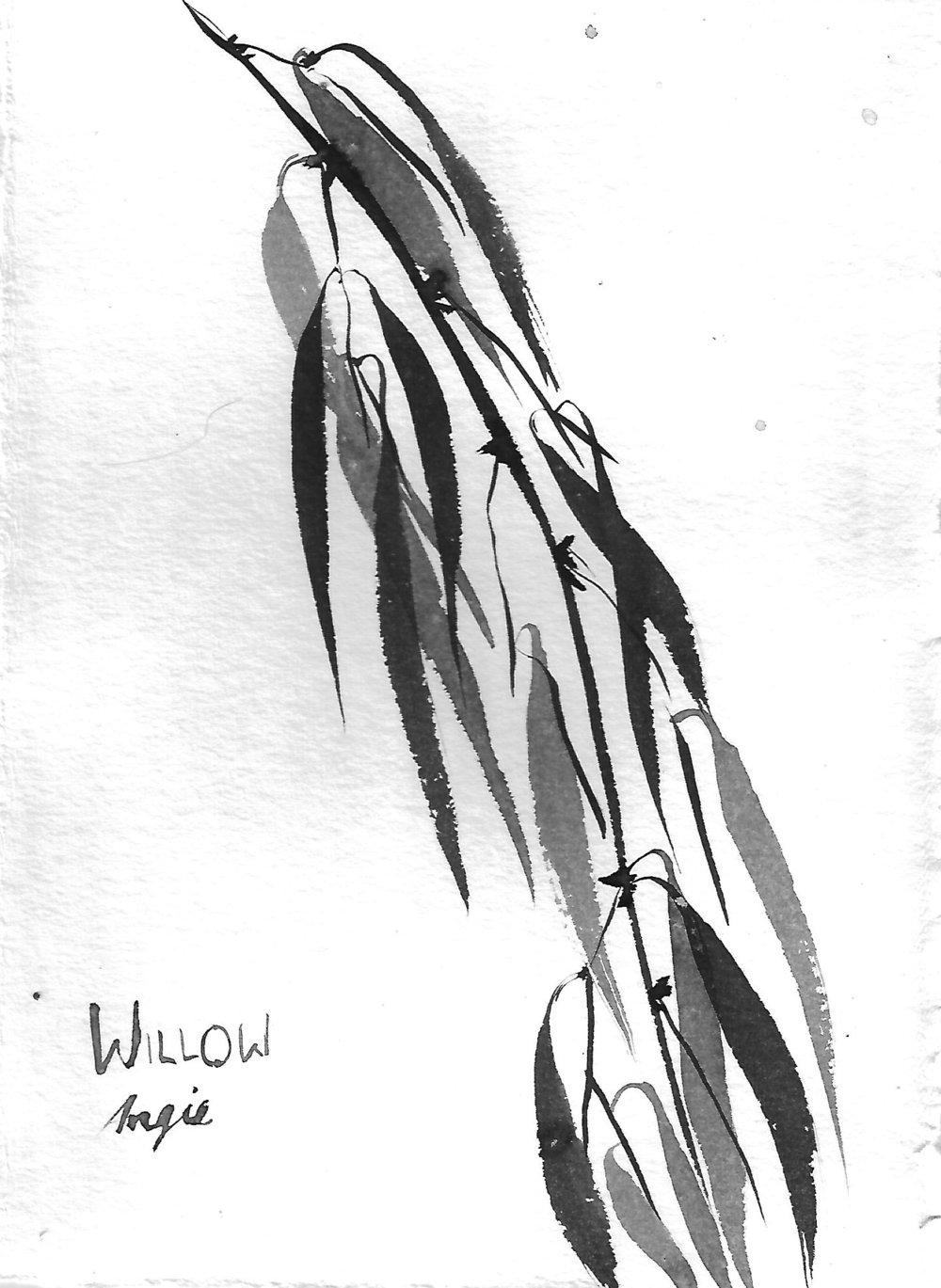 WillowBranch1.jpg