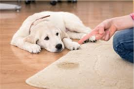 Pet Odor  Urine Treatment