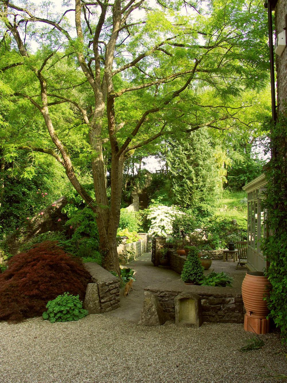 Maple & Acacia.jpg