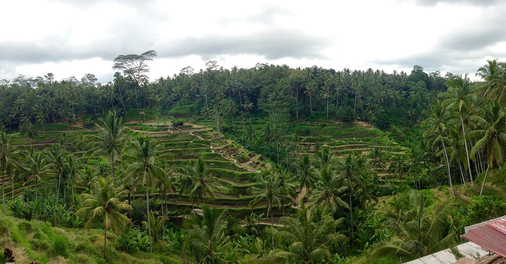Tegalalang rice terraces, Bali, Indonesia