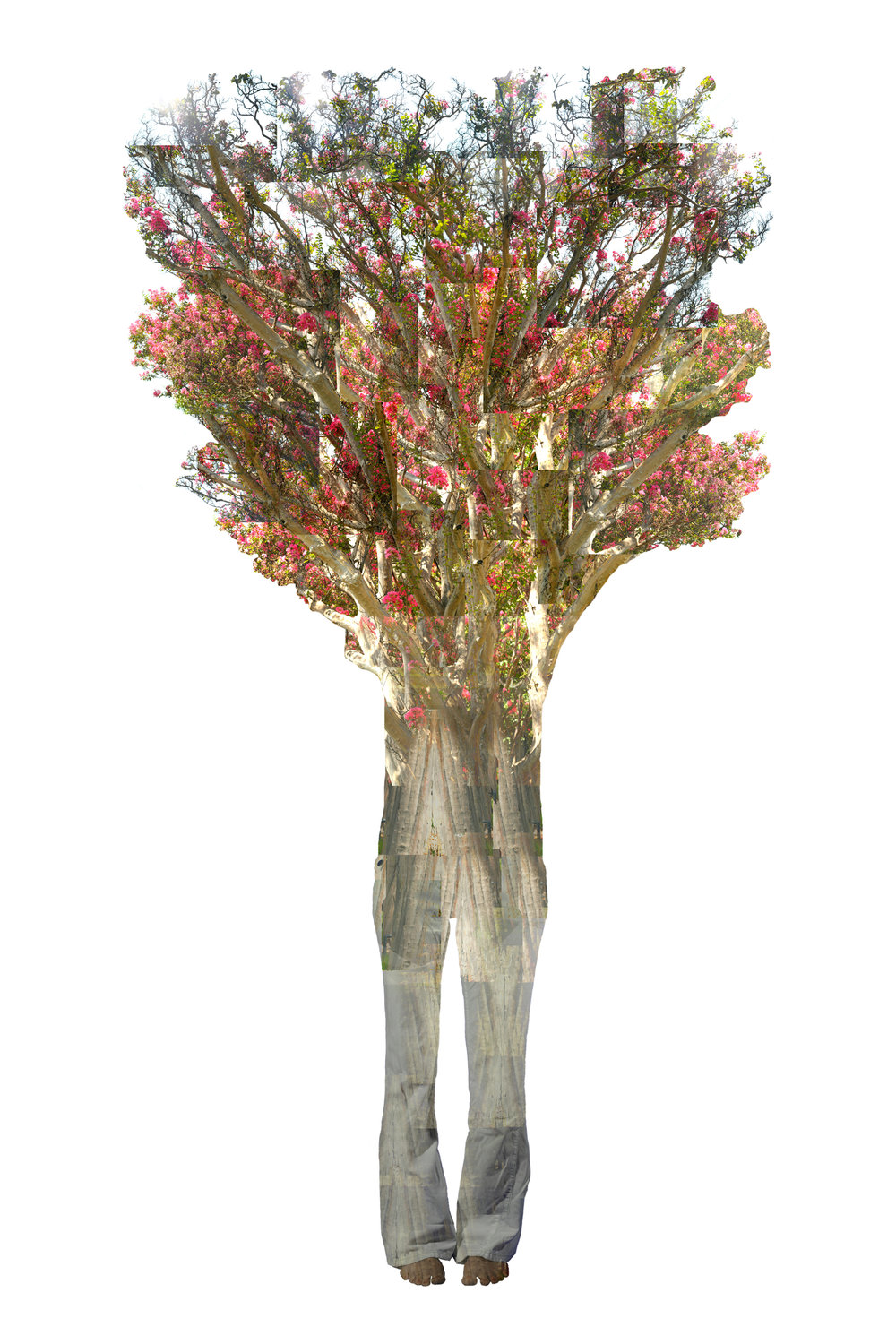 Annie Buckley,  Annie Crepe Myrtle , 2008/2014  Digital pigment print, 24 x 16 in, edition of 30, 84 x 32 in, edition of 3   Inquire