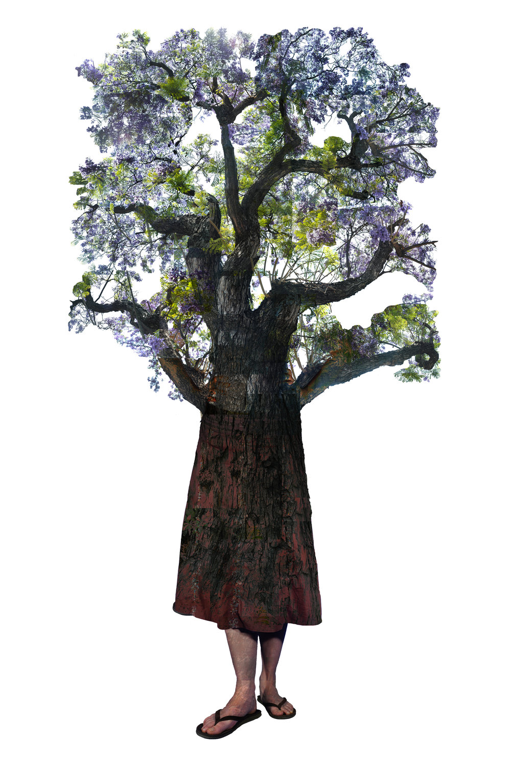 Annie Buckley,  V arina Jacaranda, 2008/2014  Digital pigment print, 24 x 16 in, edition of 30, 84 x 32 in, edition of 3   Inquire