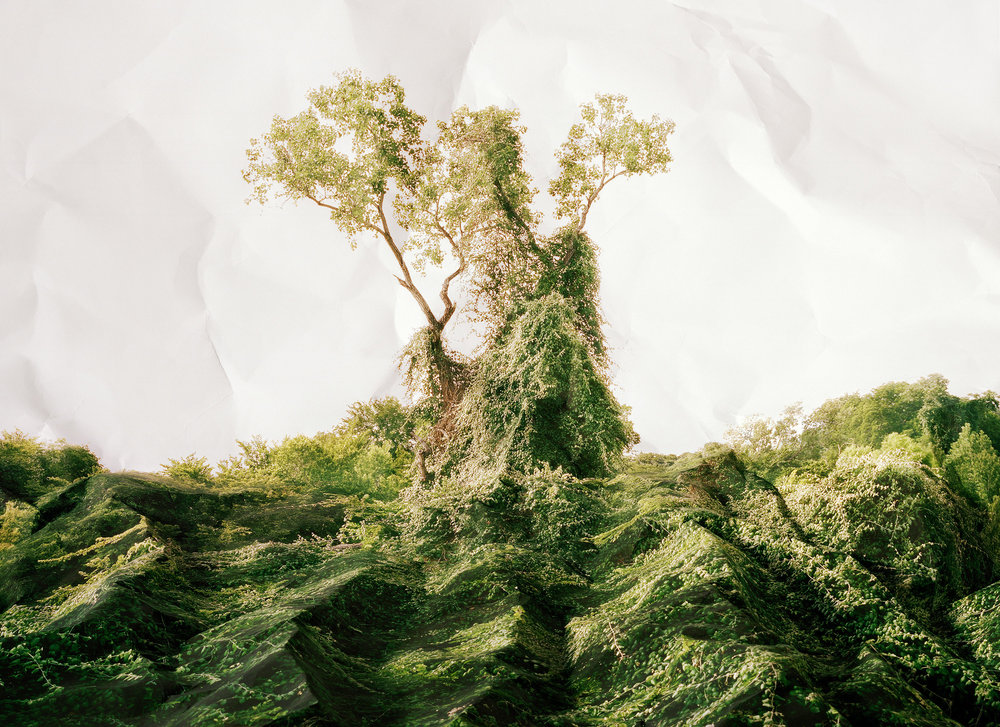 Laura Plageman,  Response to Kudzu, Texas , 2011  Digital pigment print, 30 x 40 in, edition of 4   Inquire