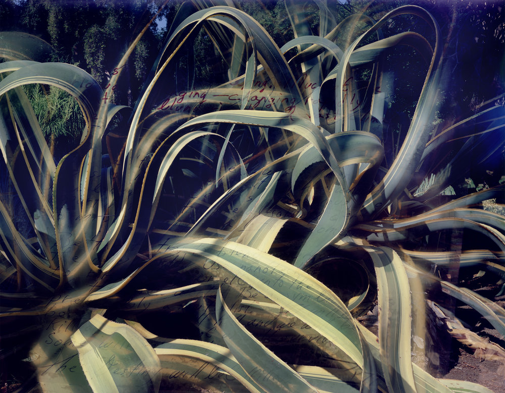 Connie Samaras,  The Past Is an Another Planet: Huntington Desert Garden (Agave) and OEB 1723, novel fragment from Parable of the Sower, 1989,  2016  Digital pigment print, 32.5 x 42 in (variable), edition of 5   Inquire