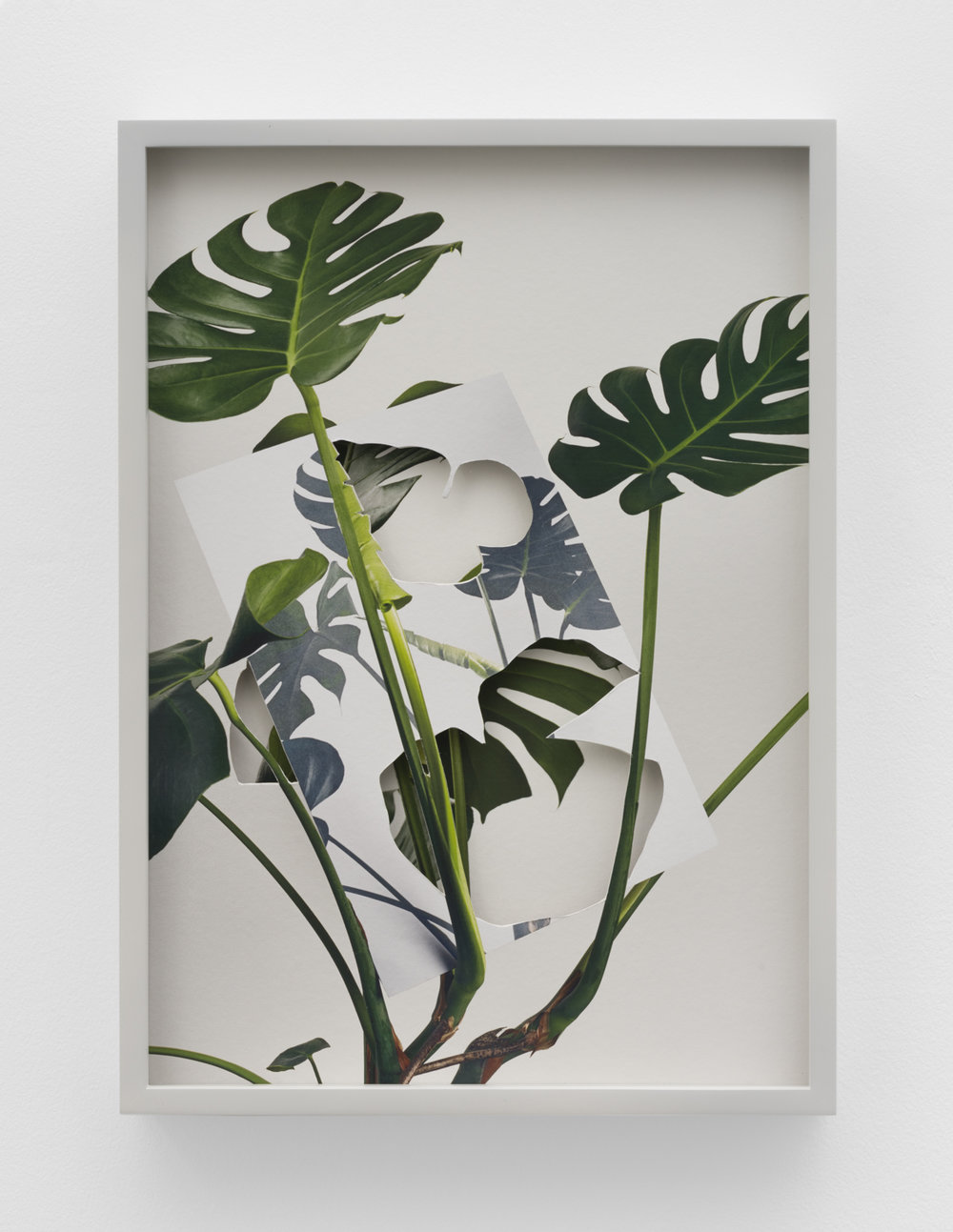 Alma Haser,  Monstera Deliciosa , 2018  Layered and cut digital pigment prints (2 layers), 47 x 35 cm total (approx. 18.5 x 13.75 in) with custom color frame, edition of 7, $1600   Inquire