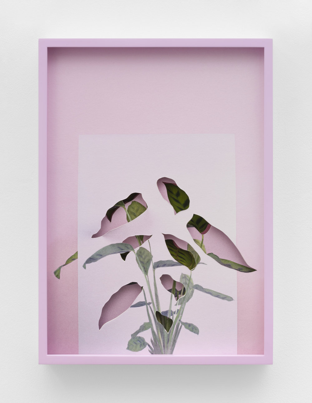 Alma Haser,  Calatheas , 2018  Layered and cut digital pigment prints (3 layers), 47 x 35 cm total (approx. 18.5 x 13.75 in), edition of 7, $1900   Inquire