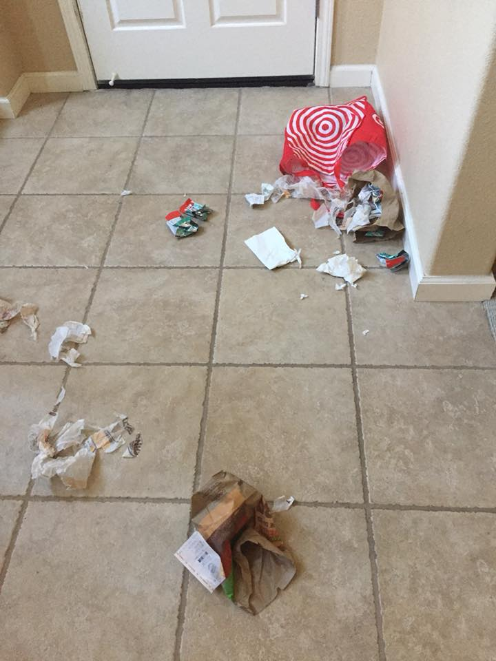 Okay, so which pup tore open the trash?