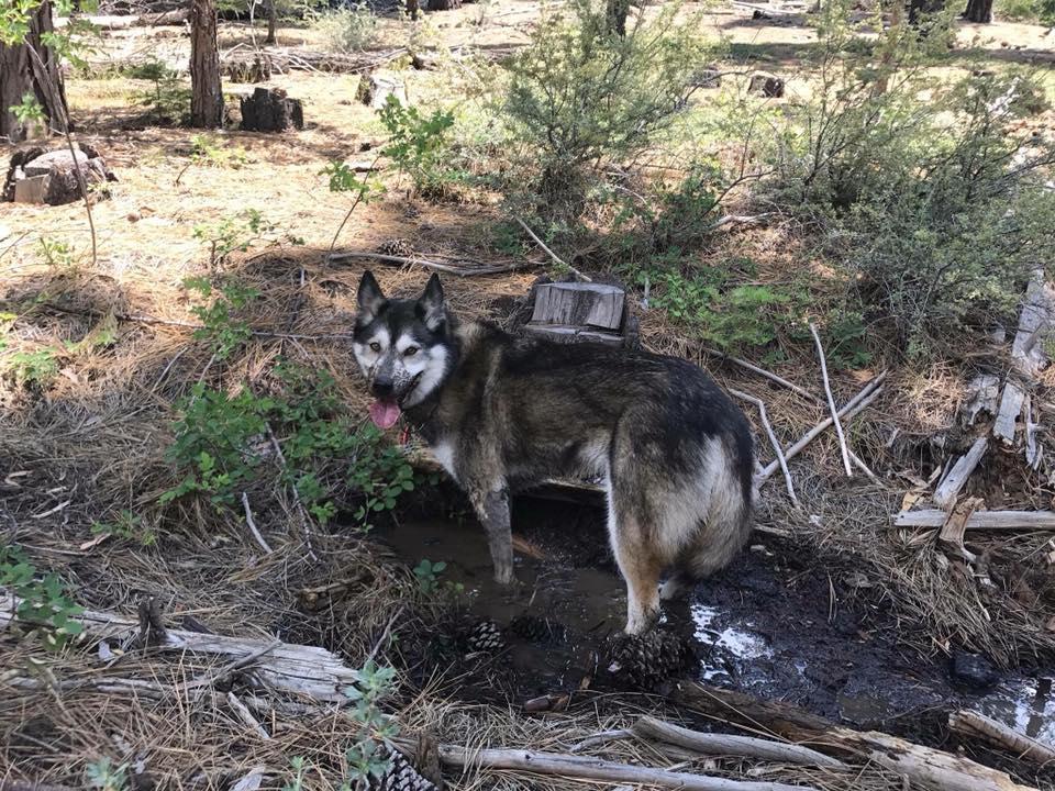 Happy (dirty) dog. Photo Credit: Kelly Lee