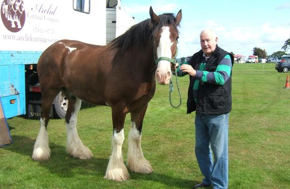 shire-horse.jpg